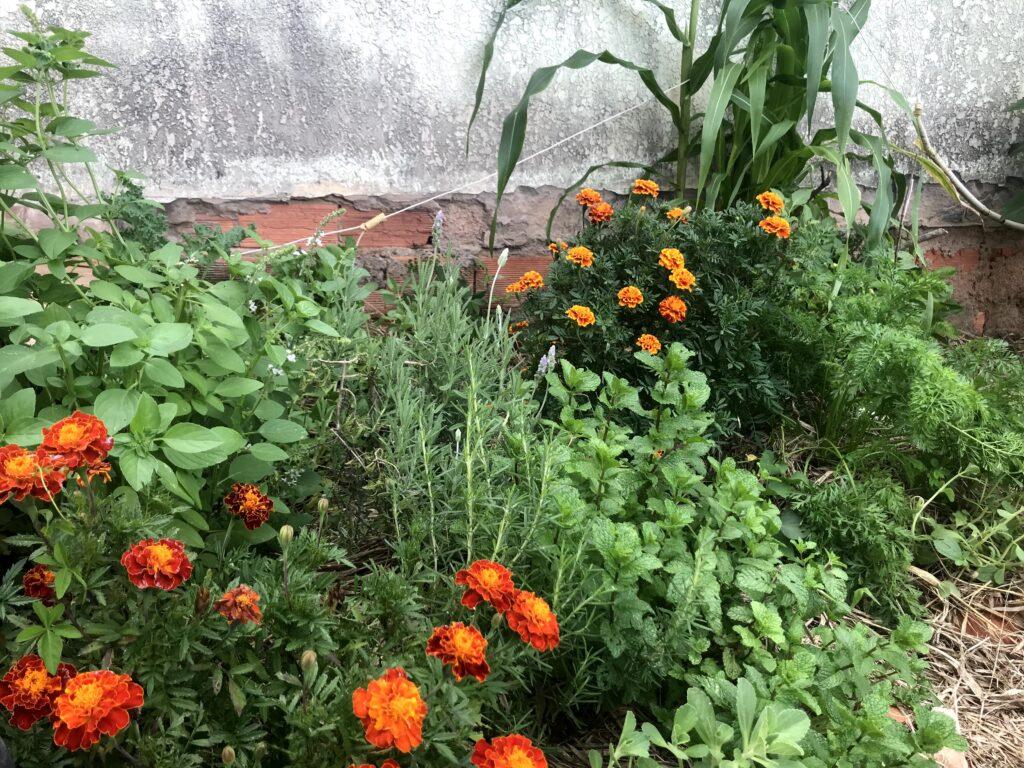imagem uma de horta agroecológica que combina diversas espécies de plantas companheiras para melhorar o desenvolvimento